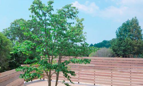 シンボルツリー、やまぼうし、ヤマボウシ、和田造園、植栽、庭